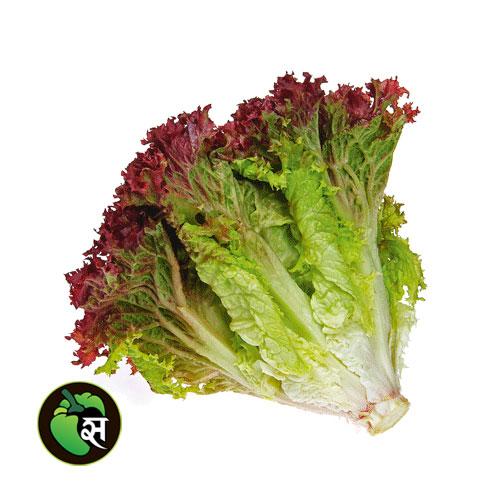Lettuce Lollo Rosso - लेटूस लोलो रसो